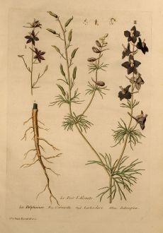 Grafiken, Regnault, Rittersporn, 1774: Le Pied d'Alouette, Larkspur, Rittersporn, Delphinium