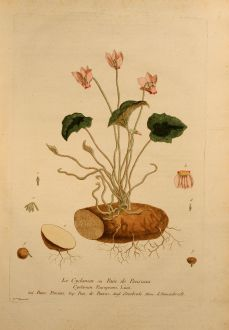 Grafiken, Regnault, Alpenveilchen, 1774: Le Cyclamen ou Pain de Pourceau, Sowbread, Alpenveilchen, Cyclamen Europeum