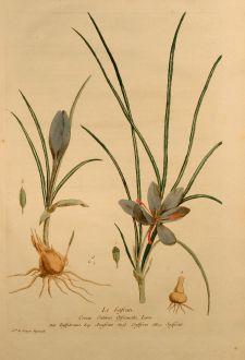 Graphics, Regnault, Saffron, 1774: Le Safran, Saffron, Safran, Crocus Sativus