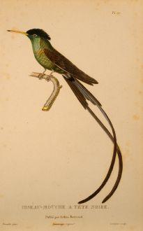 Grafiken, Lesson, Kolibri, 1829: Oiseau-Mouche a Tête Noire