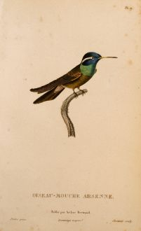 Graphics, Lesson, Hummingbird, 1829: Oiseau-Mouche Arsenne