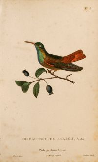 Grafiken, Lesson, Kolibri, 1829: Hummingbird Prints