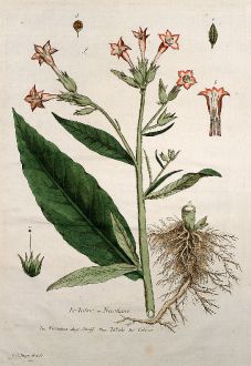 Grafiken, Regnault, Tabak, 1774: Le Tabac ou Nicotiane. Nicotiana. Snuff. Tabake. Tabaco.