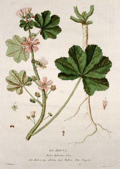 Grafiken, Regnault, Wilde Malve, 1774: La Mauve. Malva Sylvestris. Malva. Malvas. Mallow. Pappeln.