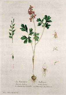 Grafiken, Regnault, Gefingerter Lerchensporn, 1774: La Fumeterre bulbeuse. Fumaria bulbosa Solida. Fumaria. Palomilha. Fumoterry. Erdrauch.