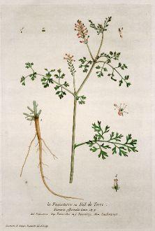 Graphics, Regnault, Earth Smoke, 1774: La Fumeterre ou Fiel de Terre. Fumaria officinalis. Fumoterre. Palomilha. Fumoterry. Zaubentropt.