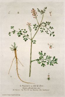 Grafiken, Regnault, Gewöhnliche Erdrauch, 1774: La Fumeterre ou Fiel de Terre. Fumaria officinalis. Fumoterre. Palomilha. Fumoterry. Zaubentropt.