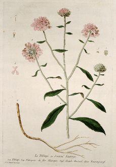 Grafiken, Regnault, Hellerkraut, 1774: Le Thlaspi ou Sennevé Sauvage. Thlaspi. Paniqueso de flor Blanquo. Treacle Mustard. Baurenpsemff.
